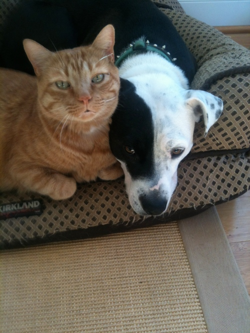 Riley Thinks Julius Needs More Bediquette