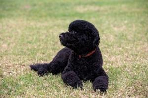 sunny-the-dog
