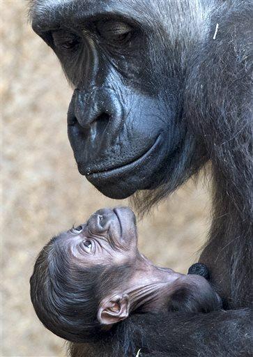 APTOPIX Germany Zoo